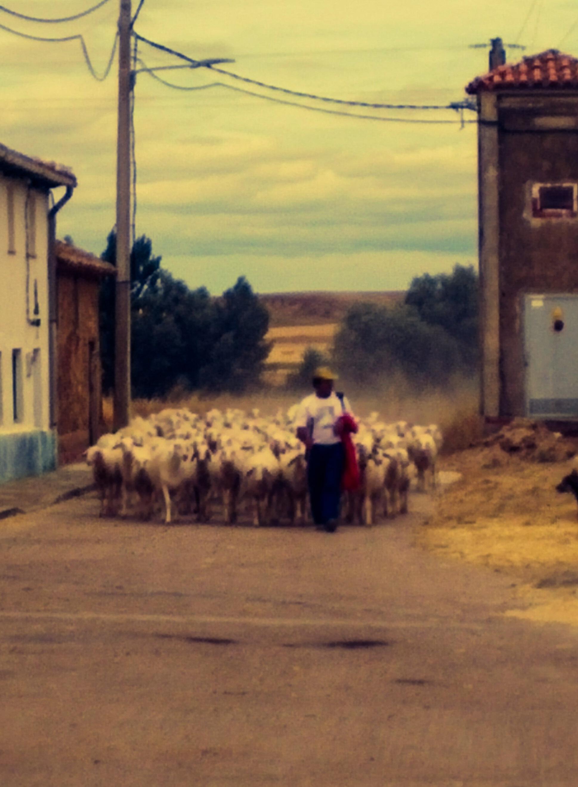 sahagun pastore villarmentero dos campos cammino di santiago de compostela